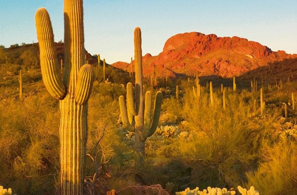 cactus-Californie-Arizona-Etats-Unis-Mexique-