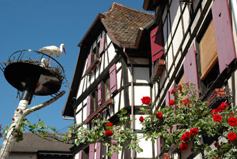 Rhin-cigogne-paysage-maisons-traditionnelles-Alsace-France-Europe.