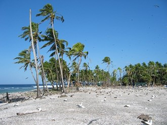 Clipperton-paysage-de-l-ile-de-Clipperton-atoll-Camp-Bougainville-Ocean-Pacifique-France